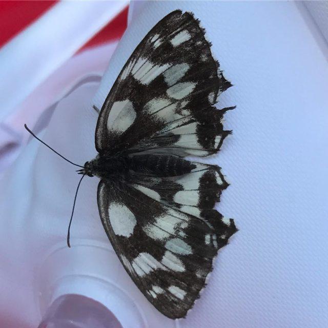 La farfalla bellezza e libert photooftheday instalike farfalla natura butterflyhellip